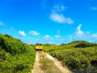 ハワイの環境NPO | ガイアパシフィックセンター